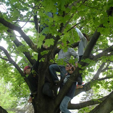 A significant portion of the family climbing the tree