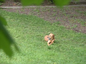 Hines relaxes in the front yard
