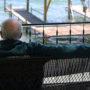 Jon Kammerdiener overlooks Seneca Lake
